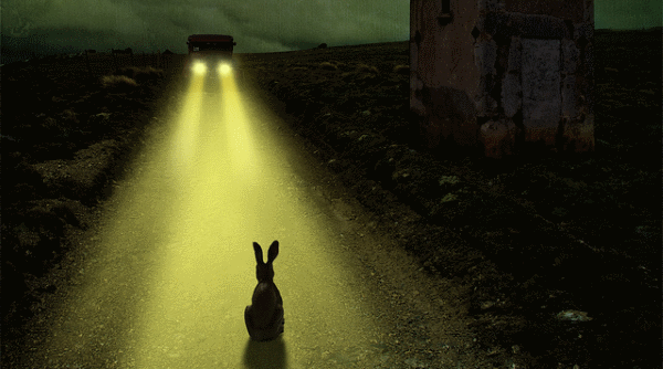 rabbit in the headlights